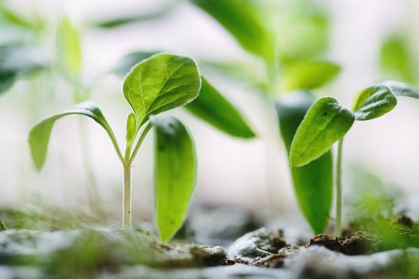 New green shoots grow from the earth
